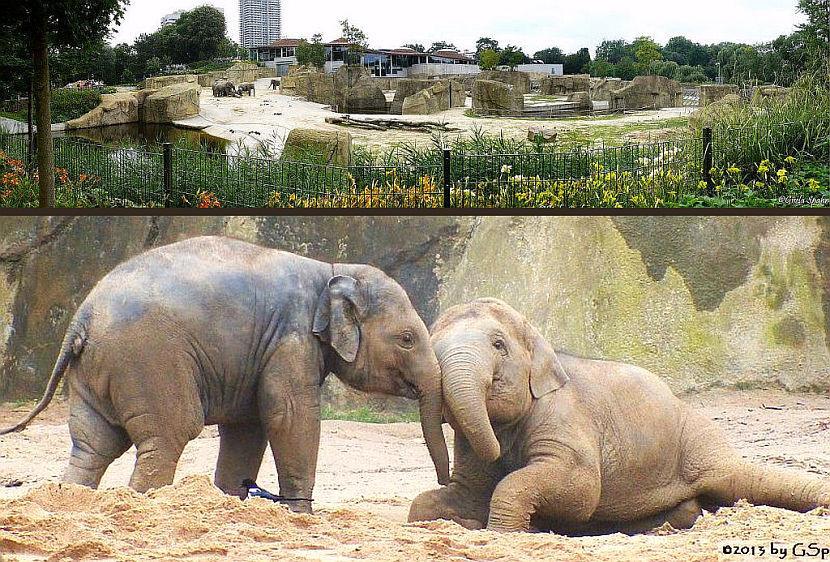 Elefantenpark 28.11.13 - 38 Fotos