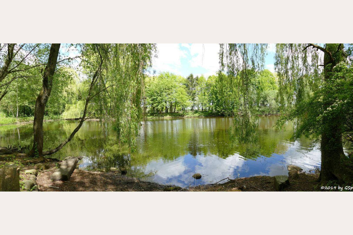 Teich mit Wassergeflügel
