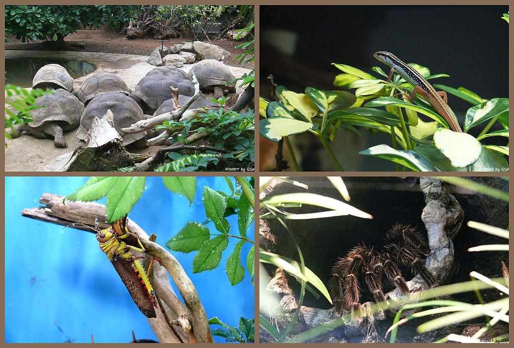 Schildkrötenhaus - 24 Fotos