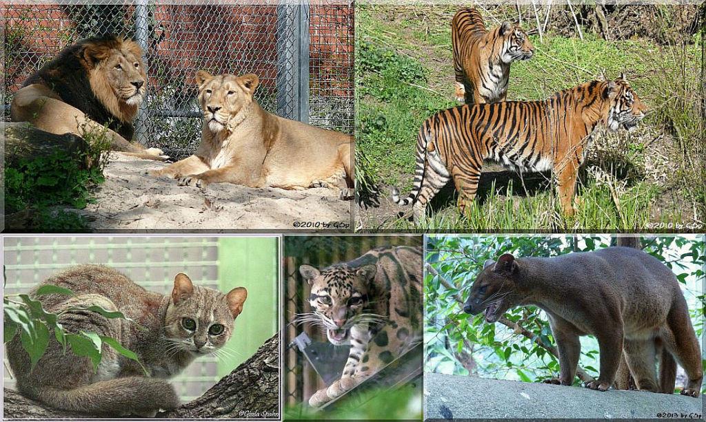 Katzendschungel - 137 Fotos