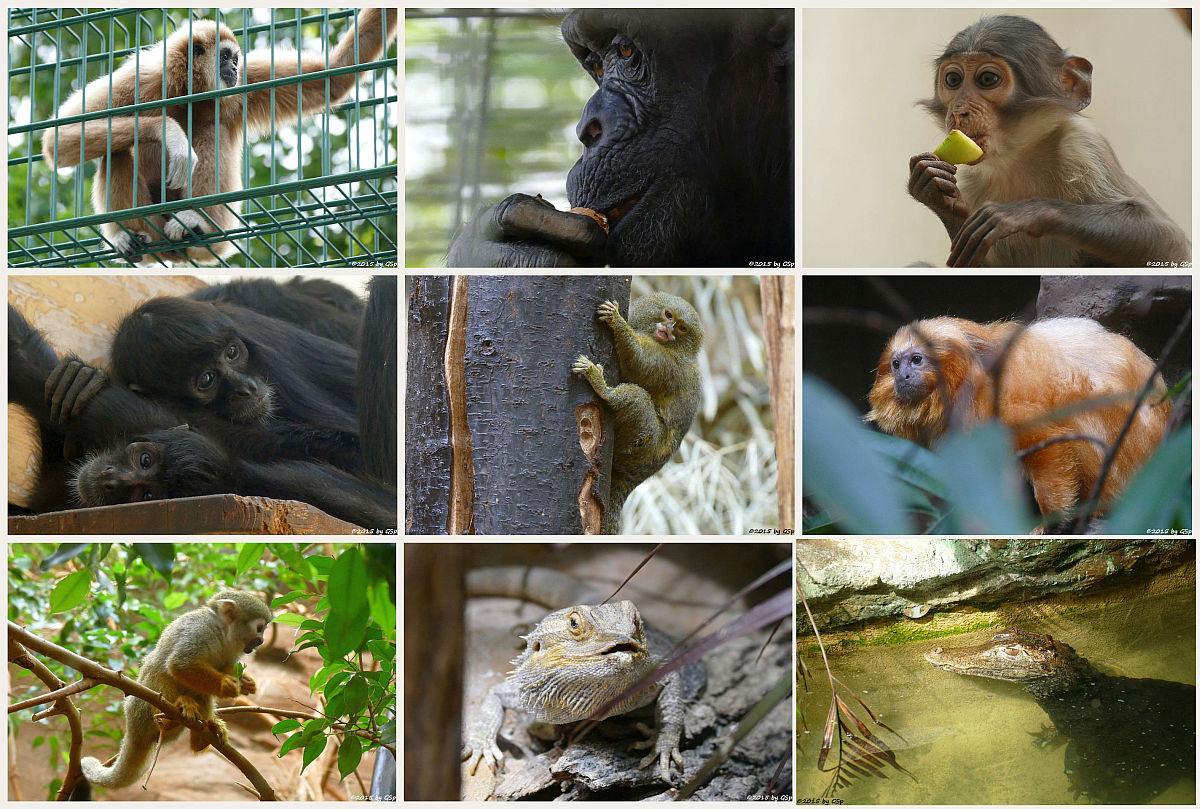 Affen- und Warmhaus - weitere Fotos in separater Galerie