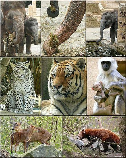 Dschungelpalast - 158 Fotos
