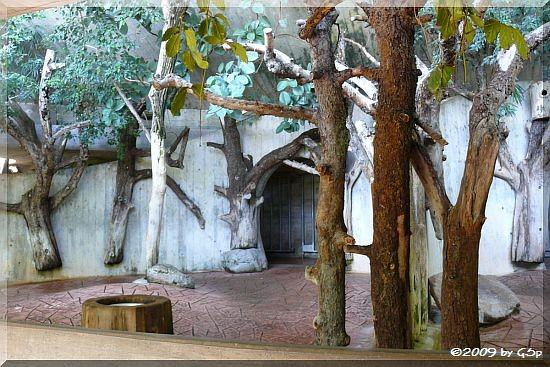 Nashorn-Innengehege
