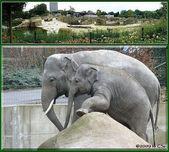 Elefantenpark 12.02.09 - 80 Fotos