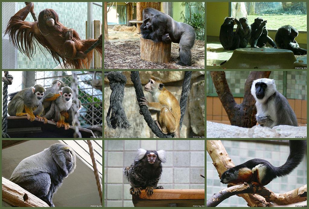 Affenhaus - Die Fotos der Tiere im Affenhaus auf sep. Seite