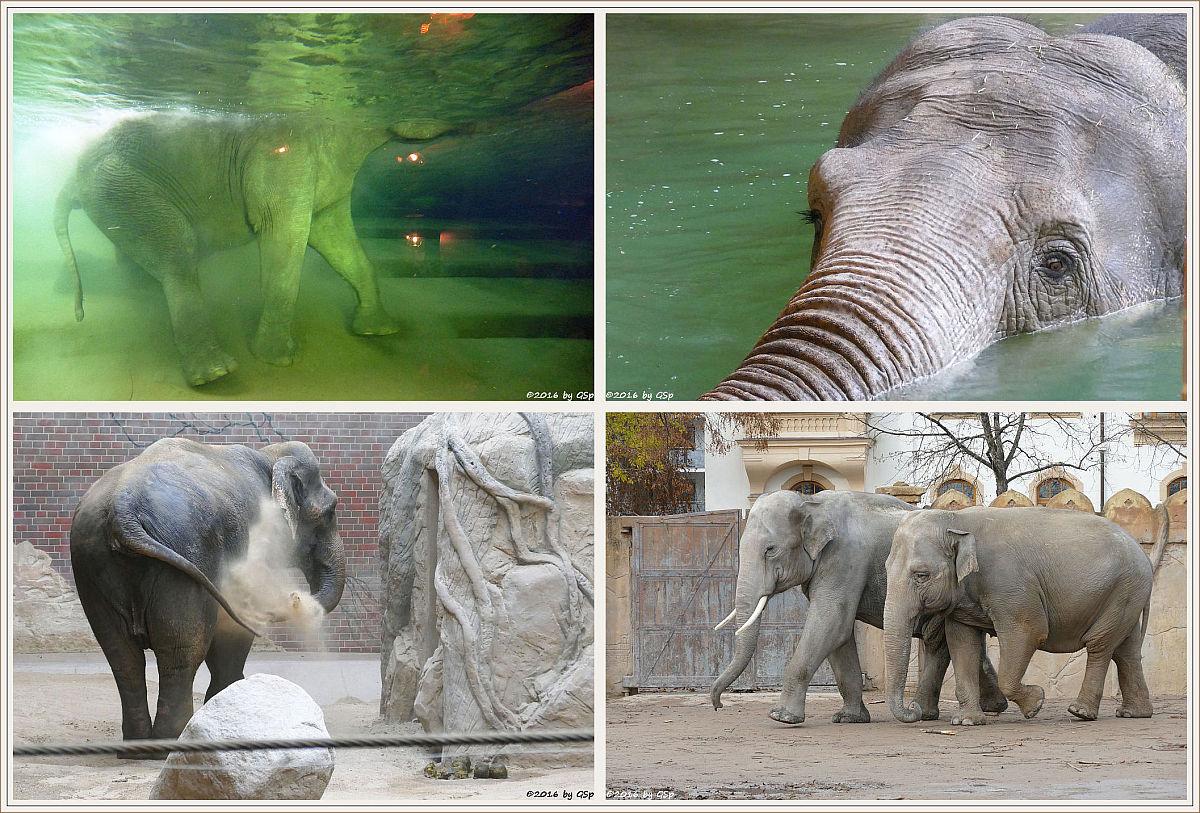 Elefanten - Fotos in sep. Galerie