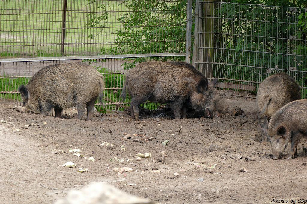 Wilschwein