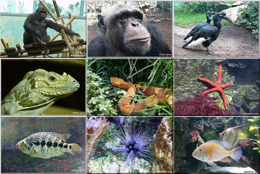 01 Urwaldhaus und Aquarium - 109 Fotos