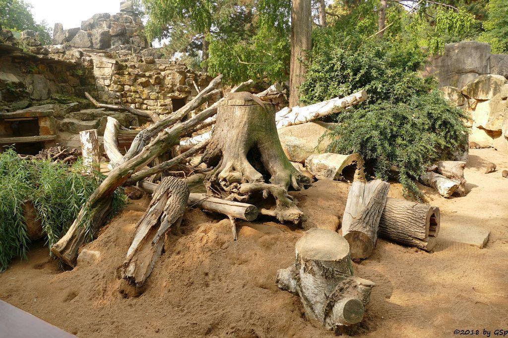 Ostafrikanische Zebramanguste