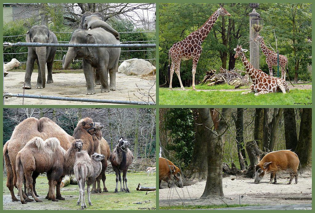 Elefantenhaus - 48 Fotos