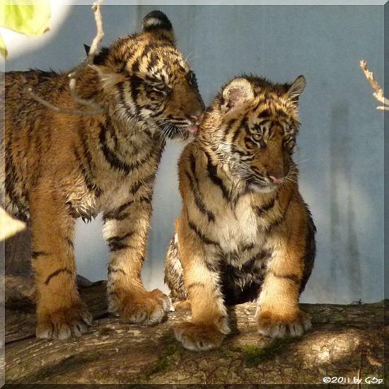 TARU und ASIM am 08.11.11