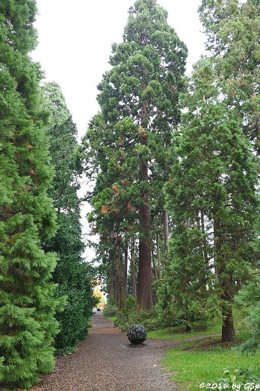 Mammutbaumwälchen
