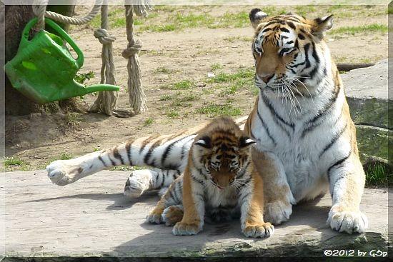 Sibirische Tigerin MILA mit Mama HANYA