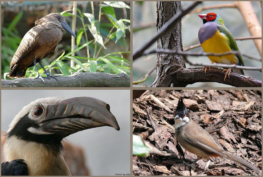 Vogelbüsche und -hallen - 85 Fotos