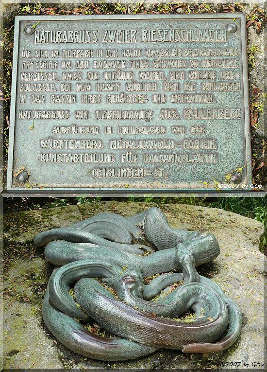 Naturabguss zweier Riesenschlangen