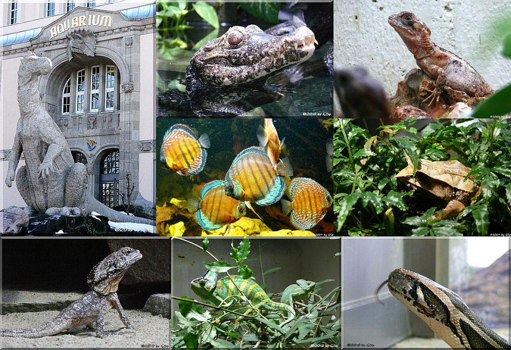 Aquarium - 114 Fotos
