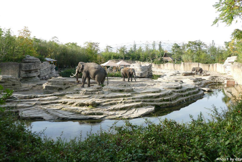 Elefantental