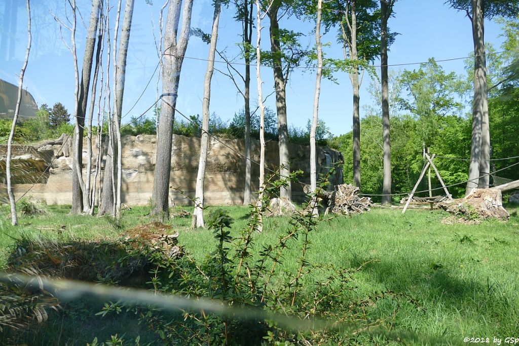 Flachlandgorilla Außenanlage