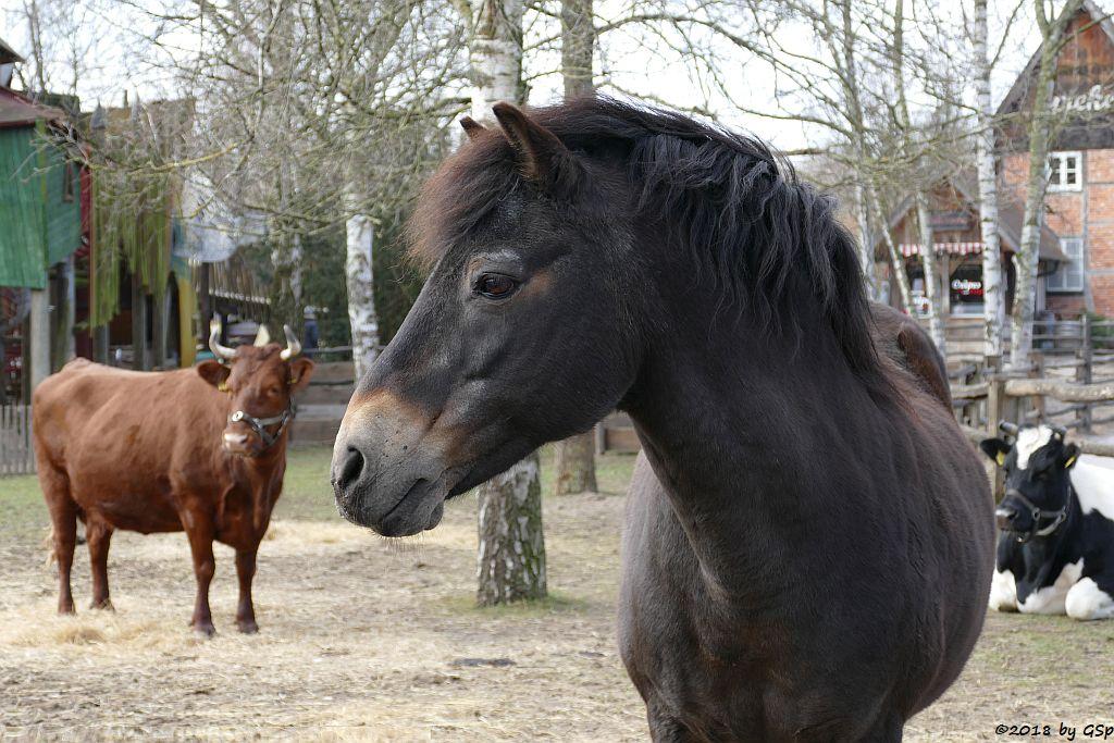 Exmoor-Pony, Altdeutsches Schwarzbuntes Niederungsrind
