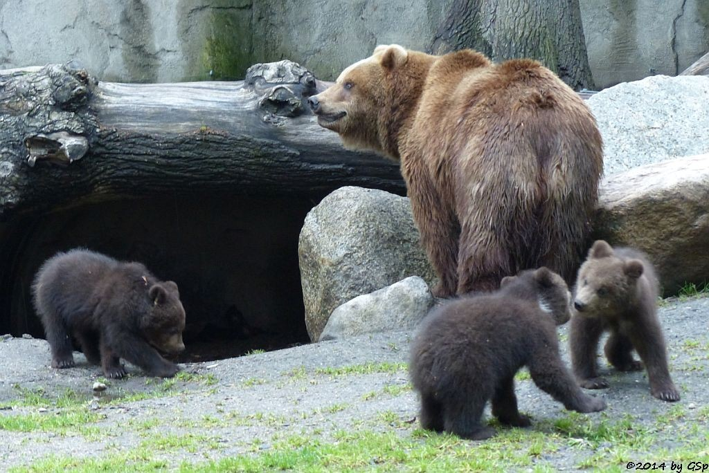 IWAN, IGOR und IRINA mit Mama MASCHA