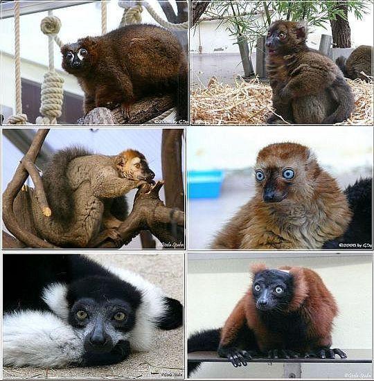 Madagaskar-Haus  74 Fotos