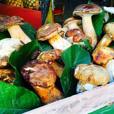 truffles mushrooms gavi italy