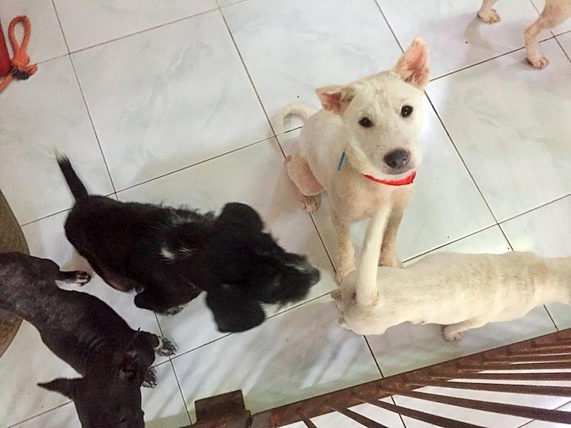 dogs at barc ubud bali