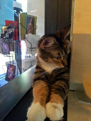 cat lounge portland