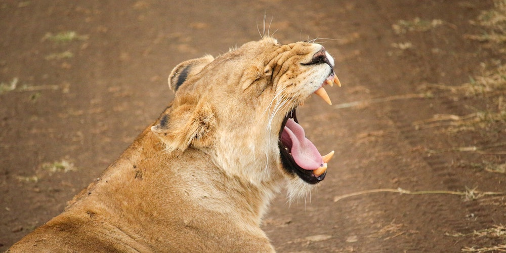 Top 10 Questions Solo Female Travelers Are Tired of Hearing