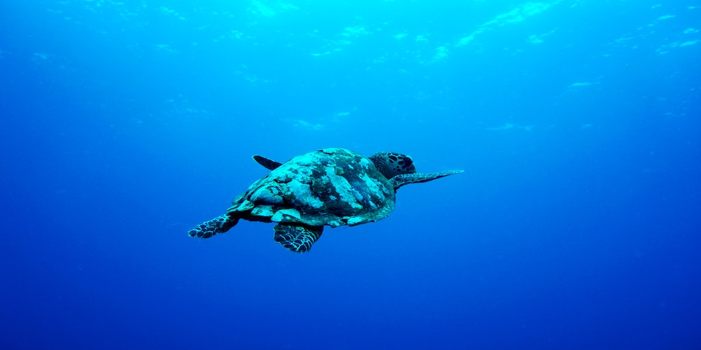 How To Find A Dive Resort And Liveaboard For Vegan Travelers