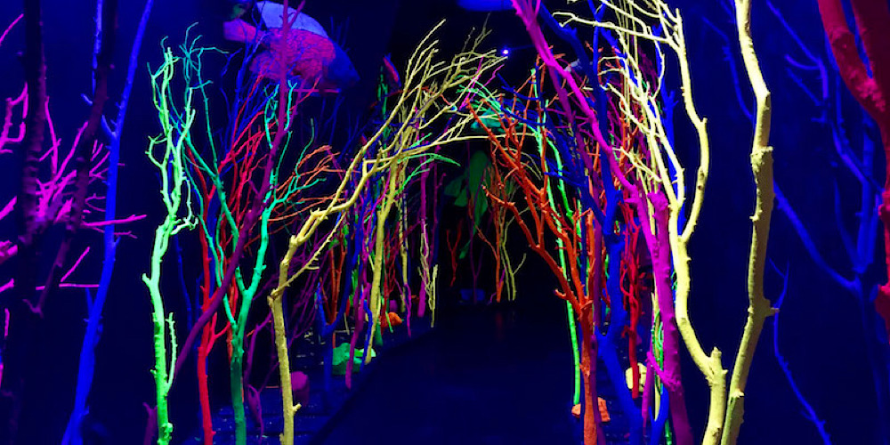 Meow Wolf: Art on Steroids