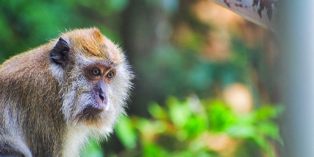 monkey at window