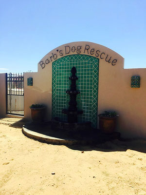 barb's dog rescue rocky point mexico