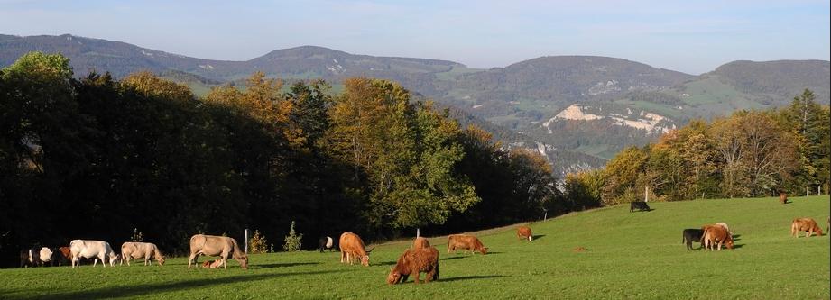 Wandern Jura