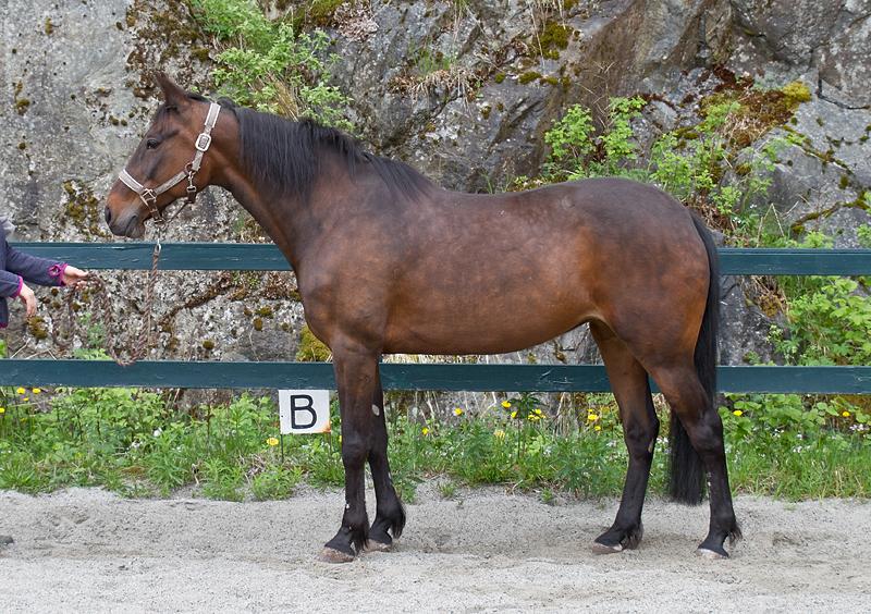 Rehabilitering av hest - under trening etter Klassiske prinsipper