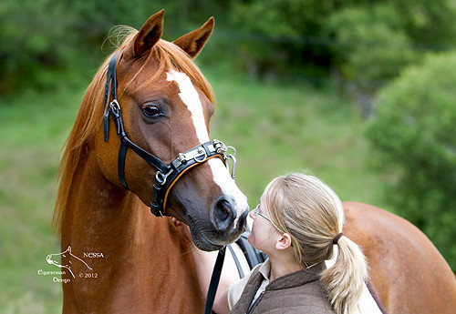 Hesteutdanning etter humane Klassiske prinsipper for glade, tillitsfulle hester