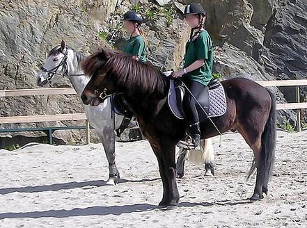 Reskolering av hest - før trening etter Klassiske prinsipper