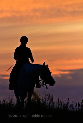 Harmoni med hesten på tur