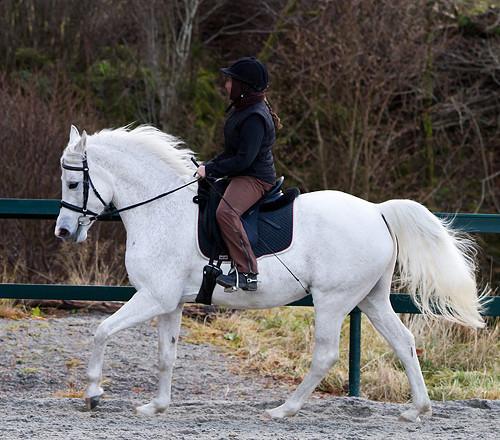 Tilridning av hest - grunnutdannet etter Klassiske prinsipper