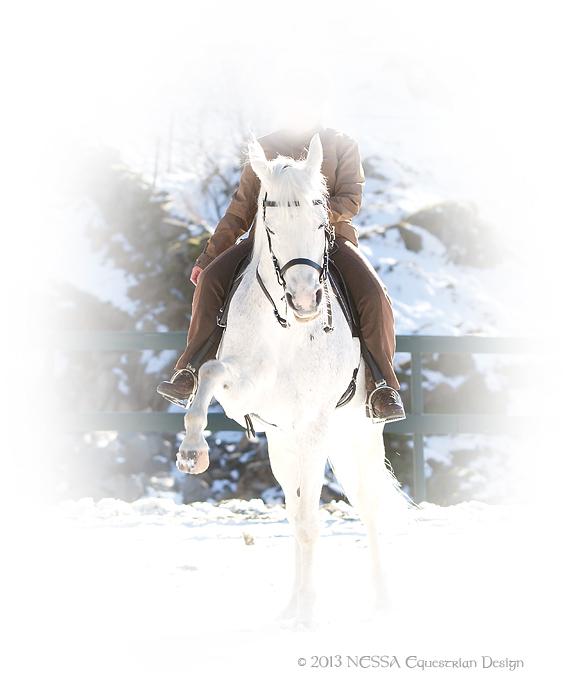 Saltilpasning med hesten i fokus!