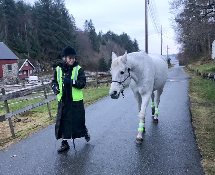 NB! Dette er en hest som er blitt trent mye med tanke på lydighet, og er i kjente omgivelser, mens det ikke er trafikk rundt. Ikke prøv dette hjemme. Å gå med en løs hest i trafikken kan bli farlig. All trening av hest skal foregå under trygge forhold.