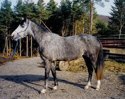 Utdanning av hest etter Klassiske prinsipper - unghest