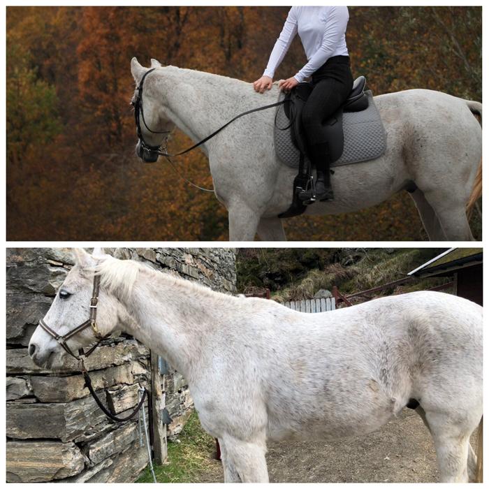 Saltilpasning - rehabilitering av svak muskelsatt hest.