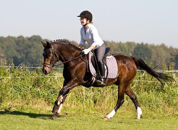 Utdanning for hest & rytter etter positive Klassiske prinsipper - treningen hesten din hadde valgt