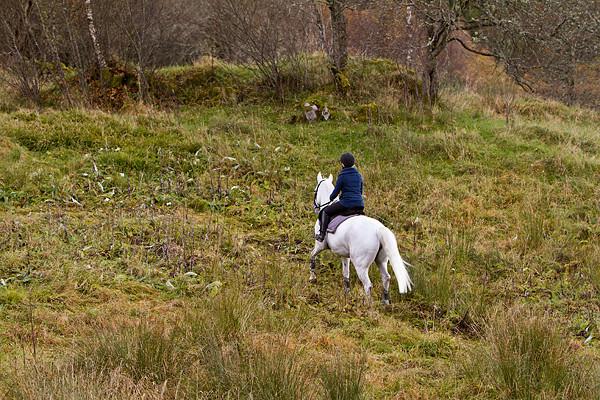 Hestetrening - turridning