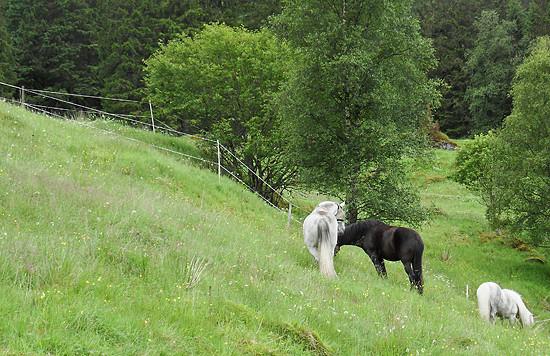 Holidays amongst the horses.