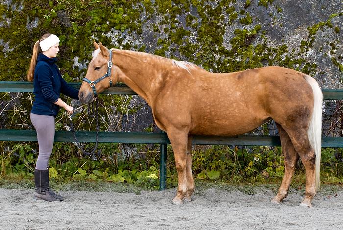 Foto av hest for saltilpasning, saltilpassing, eller salsjekk