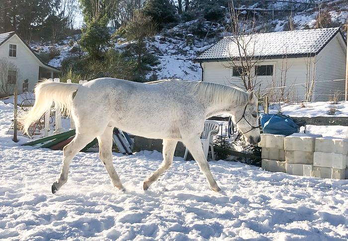 Shan 03.02.2019 - rehabilitering av hesterygg.