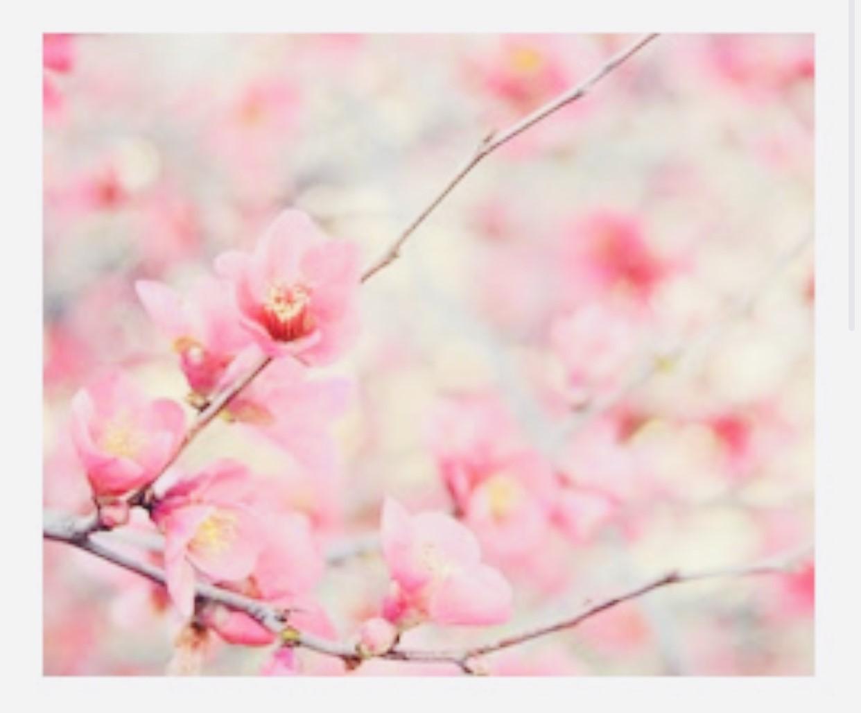 Jeder Frühling trägt den Zauber eines Anfangs in sich.