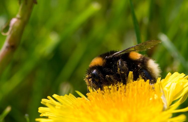 Bumble-Bee (2009)